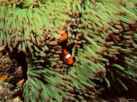 美轮美奂海底世界 - 沧海一笑 - 心灵归宿
