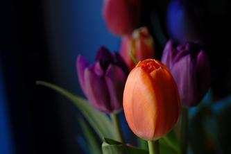 敞开心 让春天进来  08.02.21