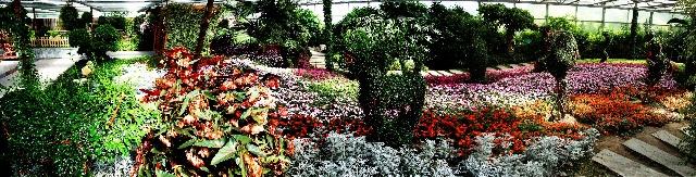 世界花卉大观园(之三)--精品花卉厅 - 侠义客 - 伊大成 的博客