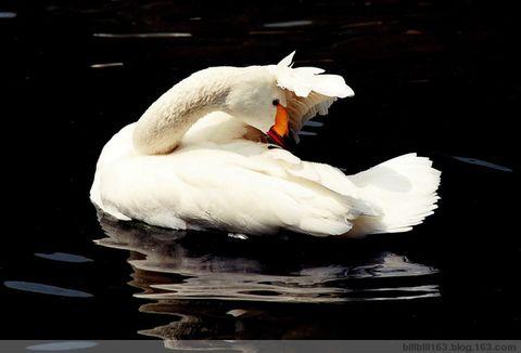 杭州西湖 - billbill163 - billbill163的博客