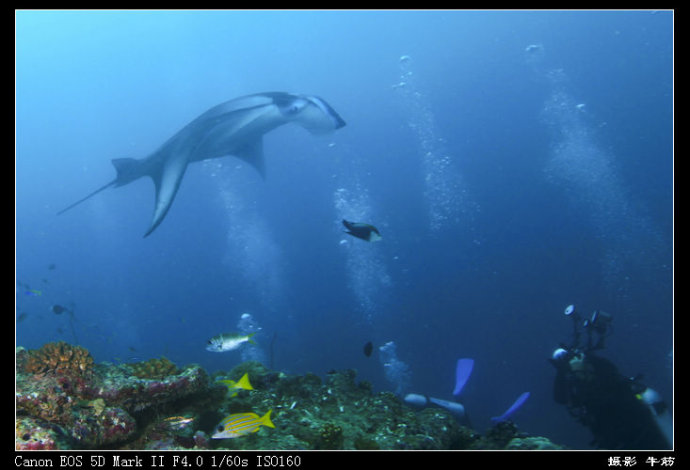 水下轰炸机 - 牛筋 - 牛筋的博客