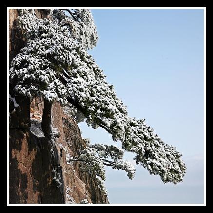 (原摄)黄山奇松 - 照看天下 - 照看天下的博客