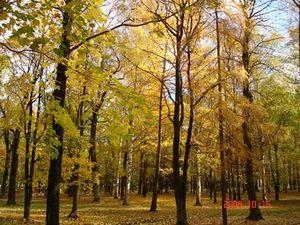 采桑子·中秋 - 度秋 - 度秋的博客