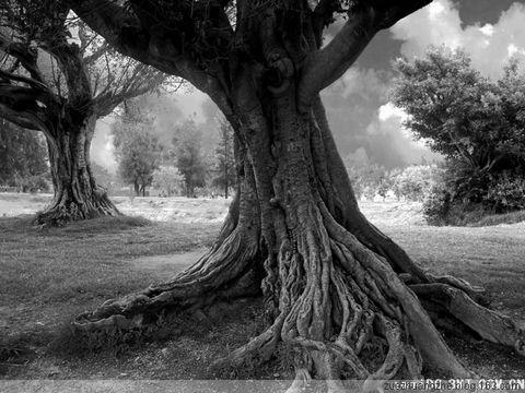 访博友海之韵(做一棵树)有感 - 天涯客 - 天涯客