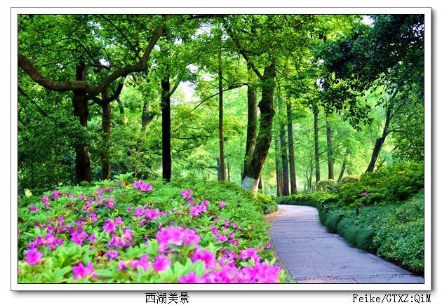 水乡纪行之一:西湖之绿 - 古藤新枝 - 古藤的博客