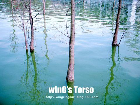 2009年2月1日 - ш í л g - wInGs Torso
