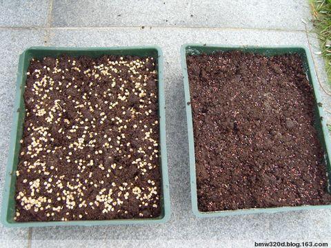 2008年11月30日 - 小明 - 小明的花园