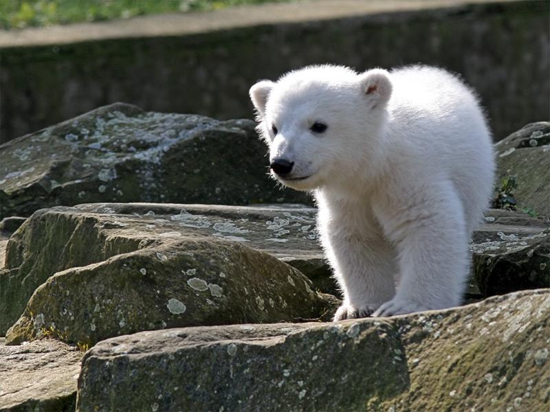 就要出游了 - 天外飞熊 - 天外飞熊