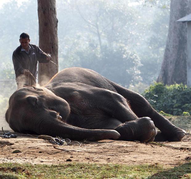 尼泊尔大象节精彩纷呈,踢球赛跑还选美(组图) - 刻薄嘴 - 刻薄嘴的网易博客:看世界