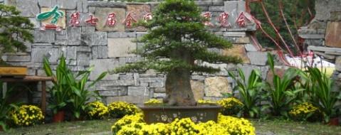 摄影精品:山水盆景集锦(12幅) - 女兵 - 温馨花园欢迎你