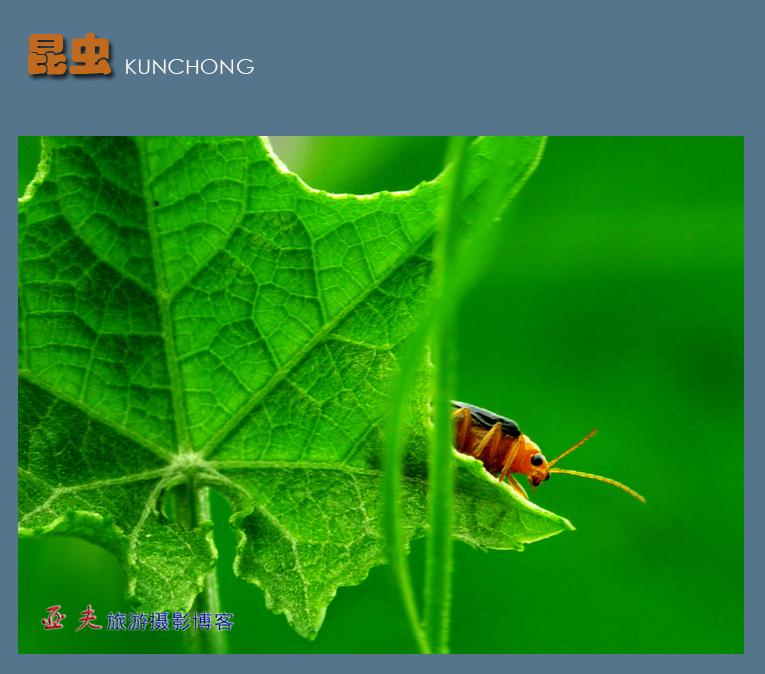 (原摄)形形色色的昆虫之一 - 高山长风 - 亚夫旅游摄影博客