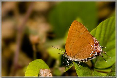 冬日里的小精灵 - Cheni - Cheni的蝴蝶馆