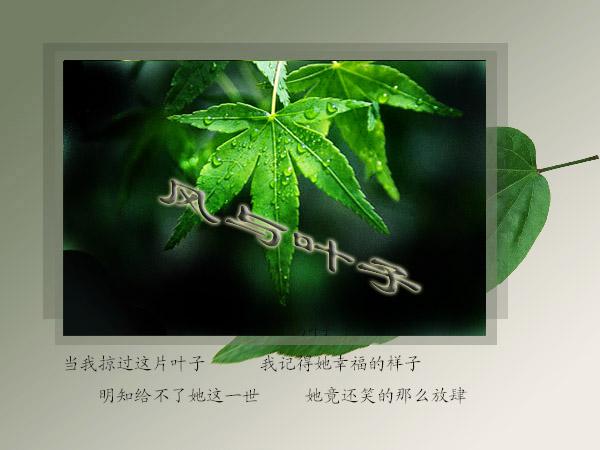 风和叶子「情感图文」 - 唐萧 - 唐萧博客