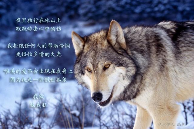 小时候看过不少关于狼的小人书,比如《狼外婆》,《东郭先生和狼