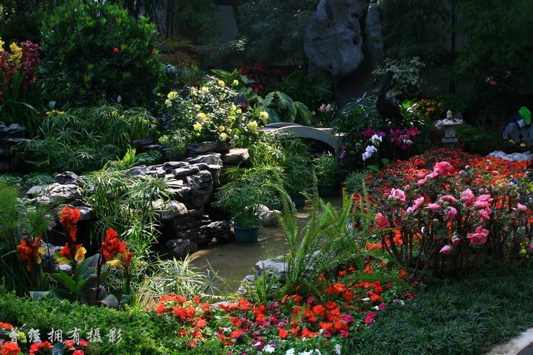 迎春园林博览会 - 曾经拥有 - 我的摄影花园