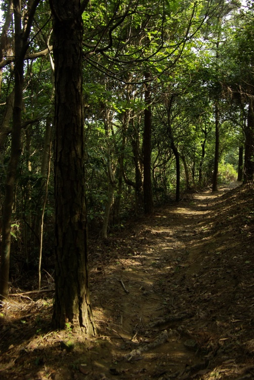 【原創】看見森林在呼喚[下篇]香港西貢-黃毛應至水浪窩 - B 哥 - B 哥的博客
