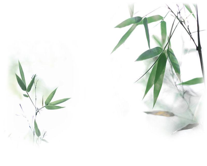 【原创】七绝·颂  竹 - 吾乐之 - 吾乐之