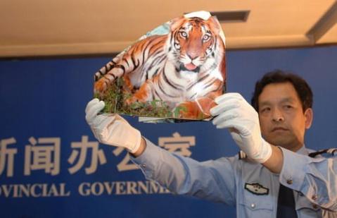 从华南虎照事件看政府的公信力(图) - 紫荆 - 情感的告白