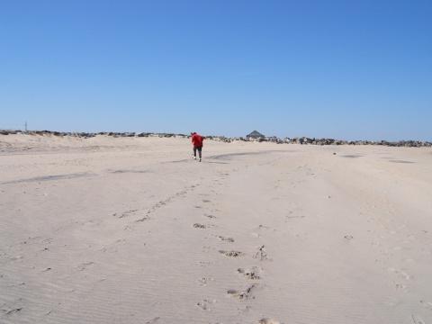 我的赴美日记【15】海滩拾贝 - 叶红 - 给自己一个理由,让自己活得更精彩