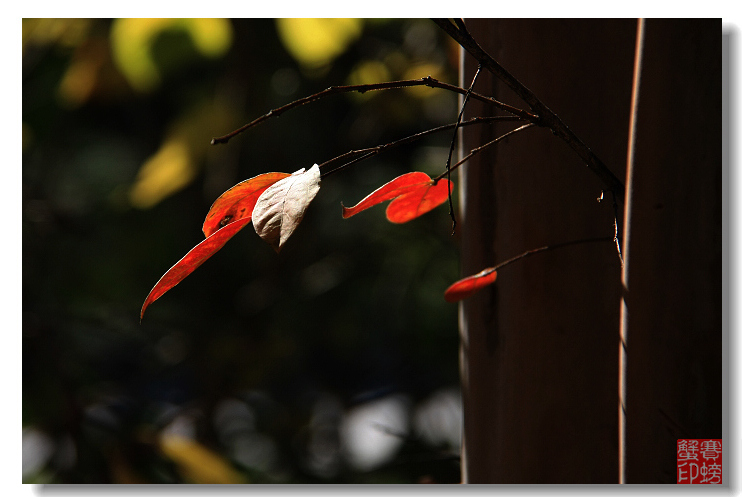 【原创】秋(一) - 赛螃蟹 - 赛螃蟹的家