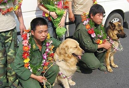 我们的另类天使搜救犬 - 清清百合 - qqbh温馨小屋