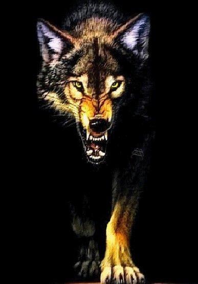 天狼之悟 - 随 遇 - 隨 遇