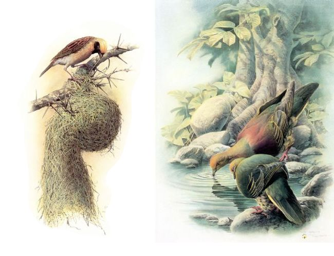 最美丽的大自然主人之飞鸟 - 鸣鹤居士 - 鸣鹤居士的博客