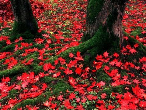 [如歌行板]秋日的私语 - 回首阑珊处 - 有空来坐坐