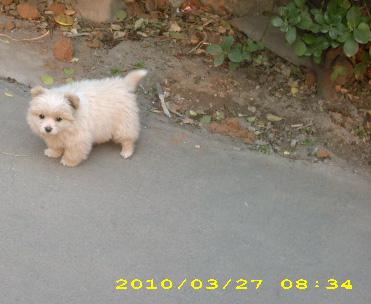 小狗点点 - yihuazheng - 采菊的博客