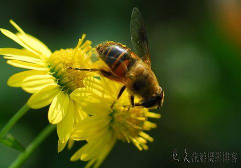 (原摄)初冬的昆虫 - 高山长风 - 亚夫旅游摄影博客