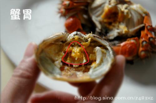 螃蟹的这些部位不要吃 - 老任乐园  - 老 任 乐 园