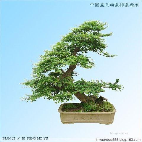 中国盆景  - sy_jssl的日志 - 网易博客 - 快乐居士 - 快乐居士的博客