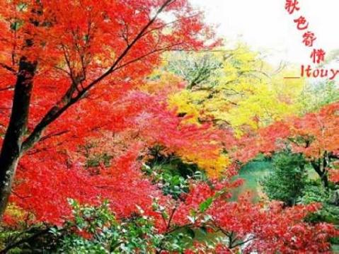 【原】秋色寄情 - ltouy - ltouy的博客