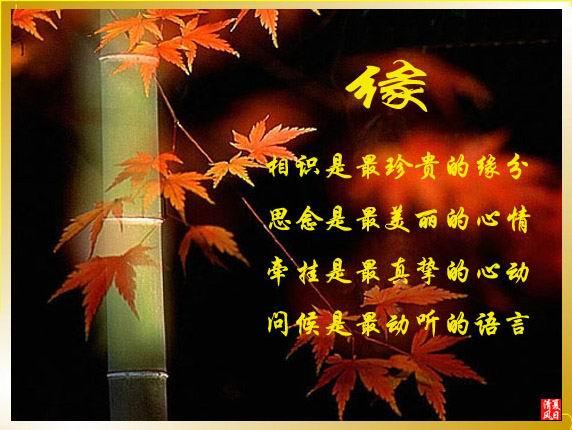 《原创》十字回文诗:缘 - 枫叶 - 枫叶 8612