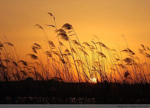 闯进镜头的夕阳(原创) - 冰芯雪蕊 - 冰天雪地的足迹