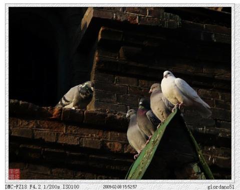 ~~DC打鸟~~ - giordano51 - giordano51的博客