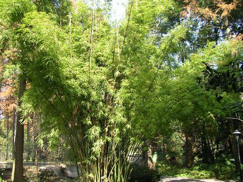 游武汉植物园(二) - 烟雨蒙蒙 - 烟雨蒙蒙的博客