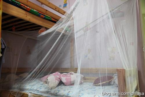 今年家里第一次来蚊子 - 懒蛇阿沙 - 懒蛇阿沙的博客