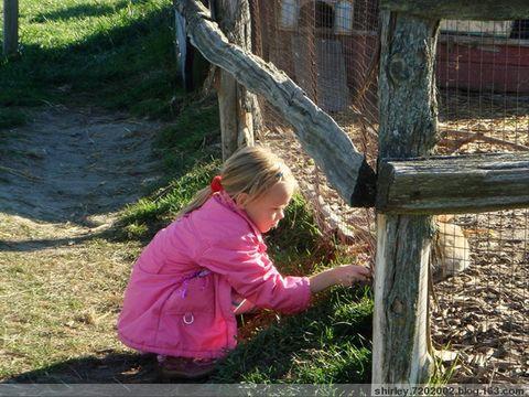 Forsythe Family Farm - shirley.7202002 - shirley.7202002的博客