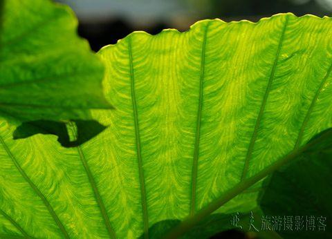 (原摄)菜园(一) - 高山长风 - 亚夫旅游摄影博客