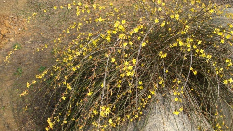 春天来了 - 兰森 - 兰森博客