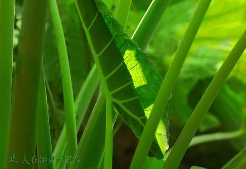 (原摄)菜园之二 - 高山长风 - 亚夫旅游摄影博客