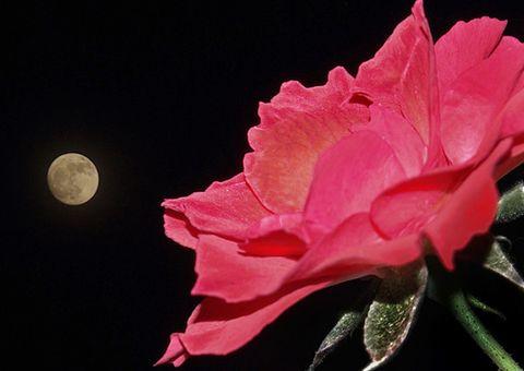 (原)有备无患之花好月圆 - 匍匐飞行 - 匍匐飞行