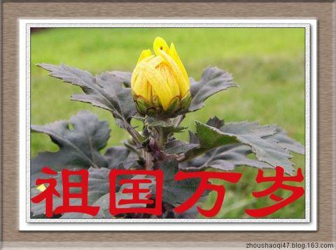 朵朵鲜花献祖国 - zhoushaoqi47 - 我的博客
