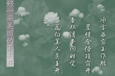 【原创】好一朵美丽的茉莉花 - 儒风 - 儒风博客