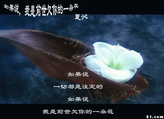 如果我是前世欠你的一朵花 - 和绅大人 - 梁羡敏博客--欢迎光临指导!