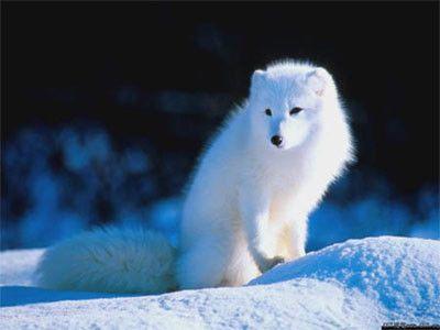 歌名大拼凑《白狐》 - 余音 - 汀兰小居
