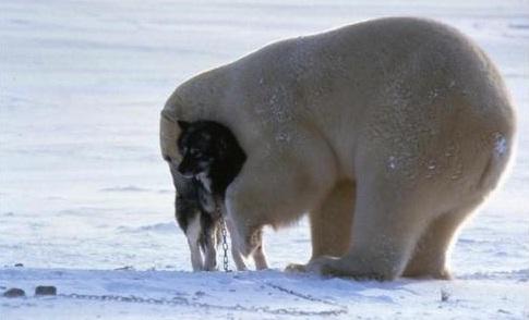 爱无界:动物间的穿越之爱!