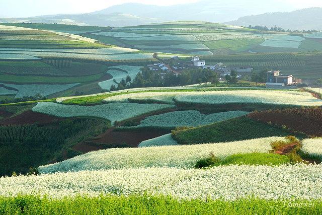 仙境 - 雲南東川紅土地 - caillou和niuniu - niuniu和caillou的植物世界