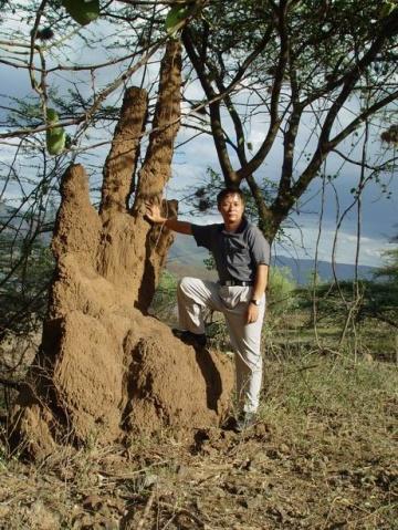 非洲蚂蚁山 - 淡淡云天 - 淡淡云天